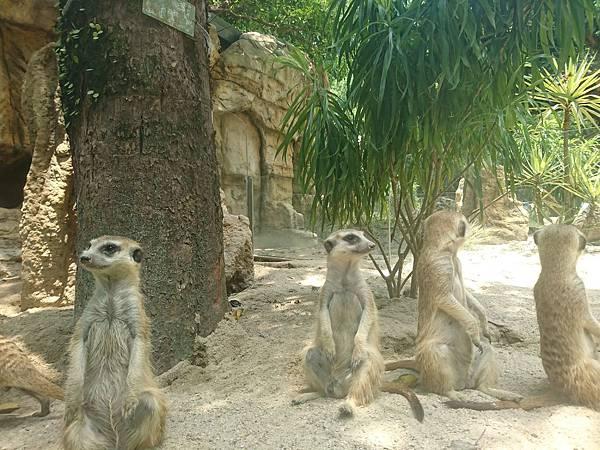 台北動物園的可愛小動物