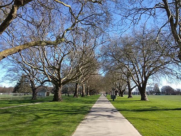 Hagley Park海格利公園櫻花