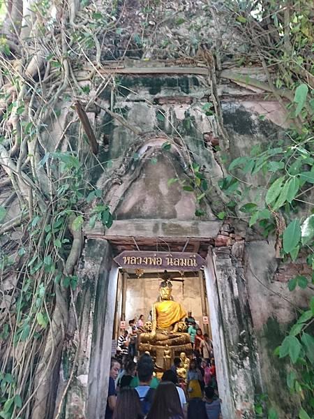 樹中佛寺Wat Bang Kung