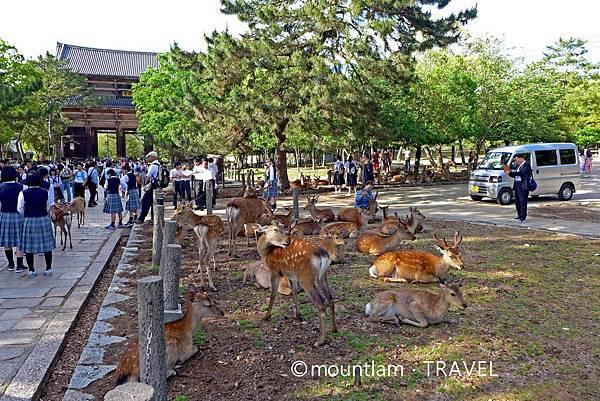關西自由行: 奈良1日遊