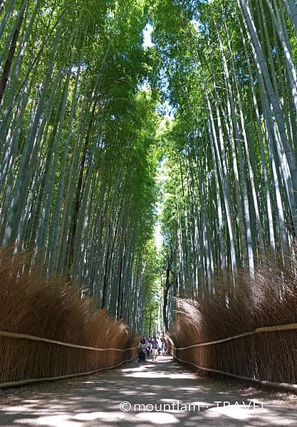 大阪京都自由行6日5夜遊記: 京都嵐山竹林小徑