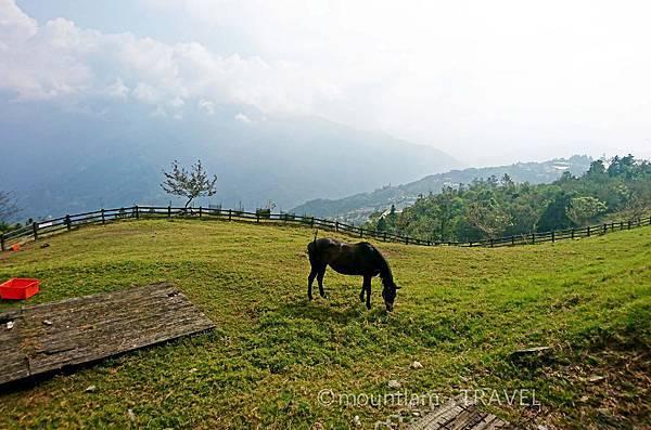 清境農場體驗騎馬
