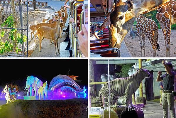 熱門清邁親子自由行景點及活動推介: 夜間動物園 Night Safari