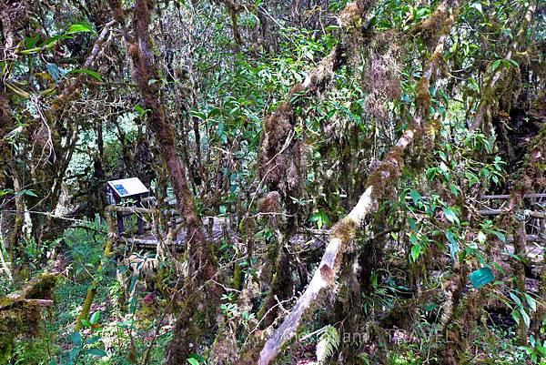 清邁茵他儂國家公園山上植物
