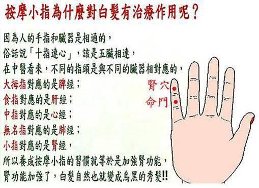 小指腎功能圖