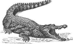 3、鱷魚法則:2