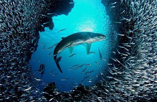 4、鯰魚效應:3