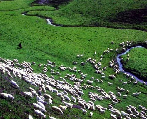 5、羊群效應:4