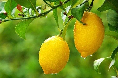 檸檬45種用法6