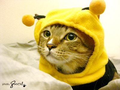 葵貓的貓.jpg