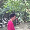 2013柴山盤榕002.jpg