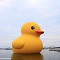 2013黃色小鴨11.jpg