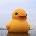 2013黃色小鴨10.jpg