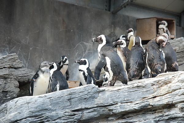 企鵝好可愛