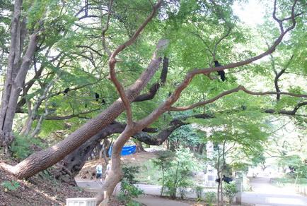 日本好多烏鴉
