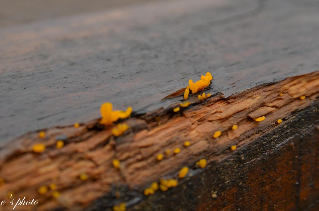 【旅遊景點】苗栗 自然風情 洗水坑豆腐 楓葉地圖民宿