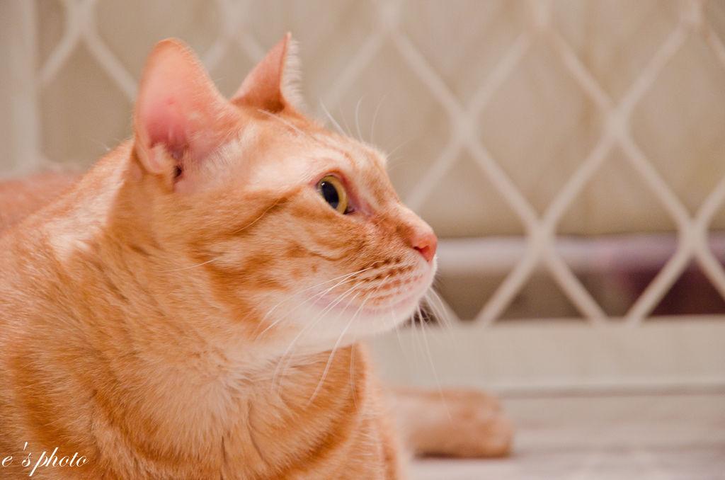【寵物寫真】台中 橘子貓 百綠