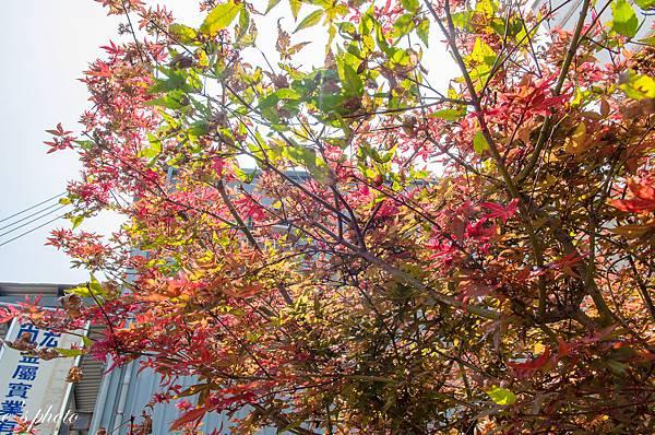 『攝影景點』楓樹社區 13咖啡+誠實商店+楓興宮