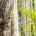 『攝影景點』南投 忘憂森林