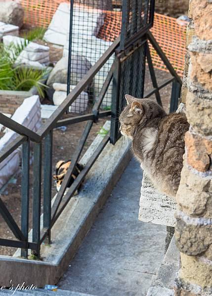 『蜜月旅行』加利利 義大利11日 羅馬(Roma) Sofitel 羅馬的貓 三越百貨 晚餐:周老爹 羅馬夜拍