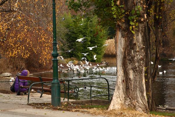 奧地利維也納市立公園的鳥01