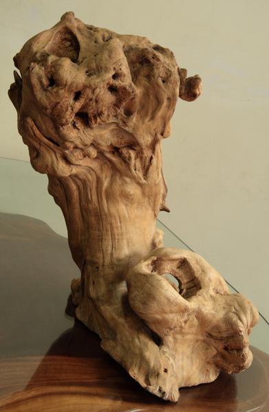 檜木樹瘤-1