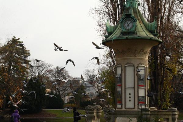 奧地利維也納市立公園的鳥02