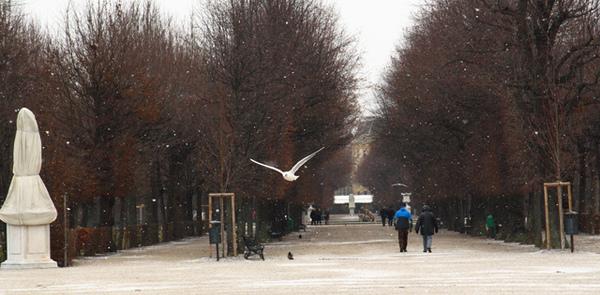 奧地利維也納熊布朗宮的鳥02