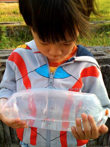 Todd & 6隻水晶小蝦蝦 & 50隻彩虹小小魚03.jpg