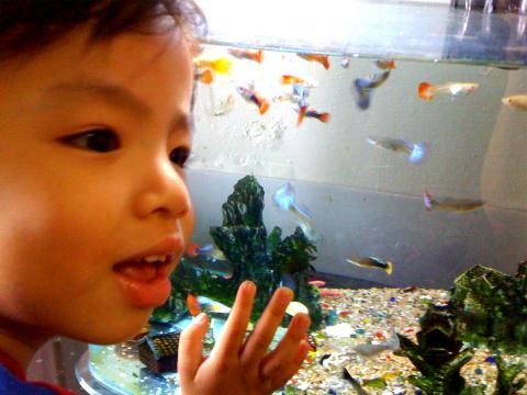 20100610TODD彰化看魚