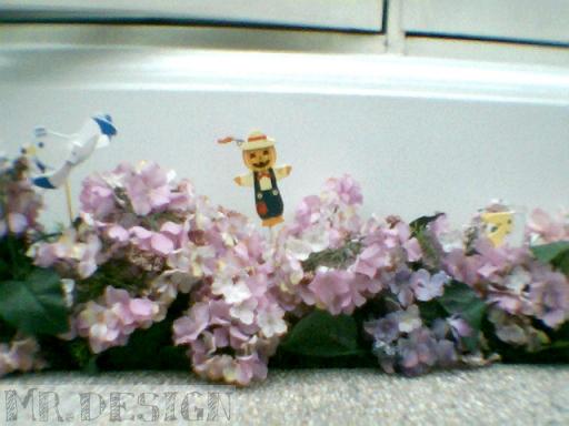 Todd@數位相機生活日記∼這是餐廳外面的花花喔∼