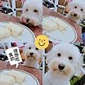 IG-zooooey_-帕瑪森鹹乳酪起士蛋糕+馬可先生台灣好茶-古早味紅茶-經典紅茶-08.jpg