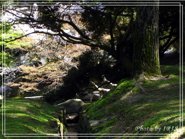 奈良古寺與梅花鹿2010_0408_114908.jpg