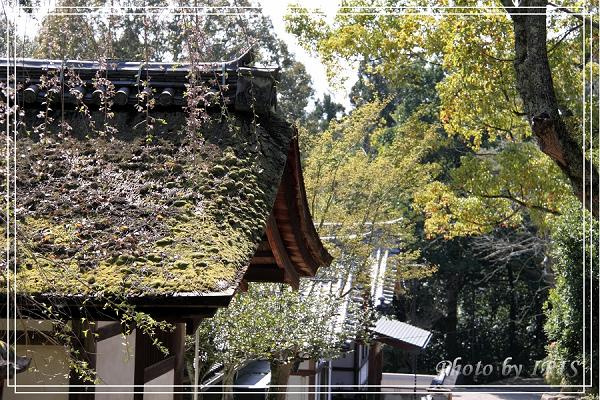 奈良古寺與梅花鹿2010_0408_133025.jpg