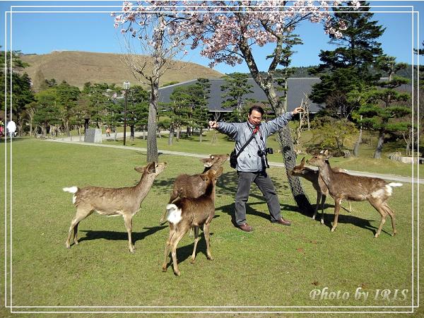 奈良古寺與梅花鹿2010_0408_141405.jpg