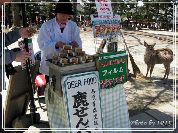 奈良古寺與梅花鹿2010_0408_122110.jpg