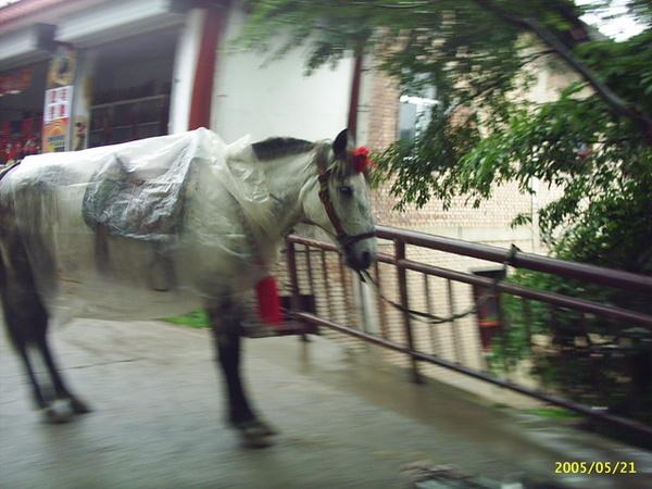 麥積山石窟下雨穿雨衣的馬
