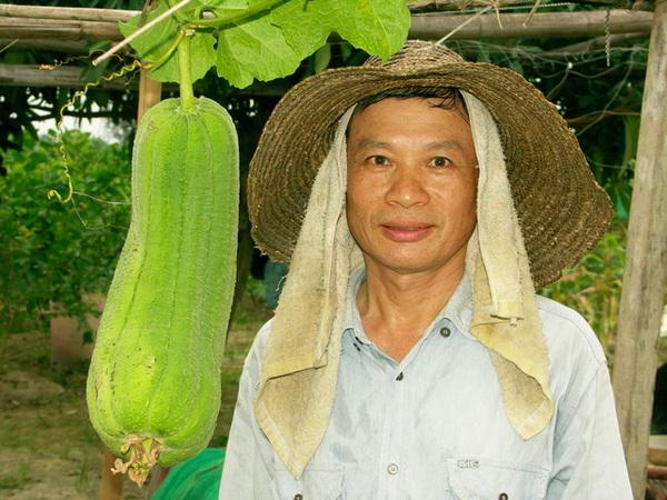 好大的絲瓜