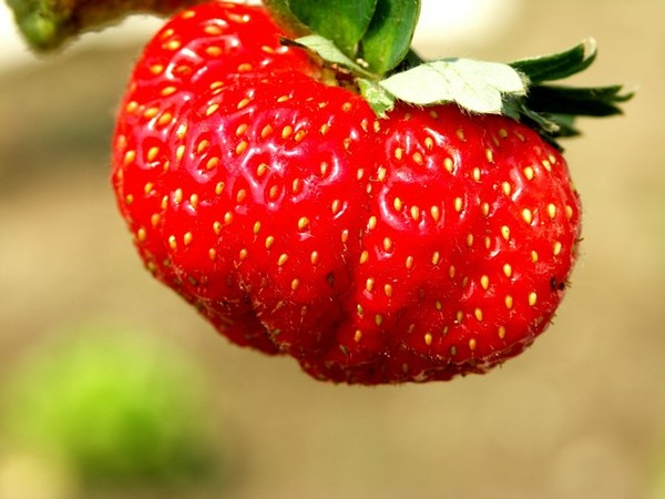 紅通通的草莓07.2月