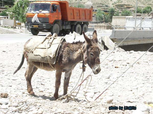 從日喀則回拉薩的路邊餐廳-烈陽下的小毛驢3.JPG