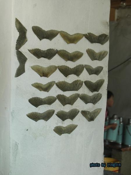 從日喀則回拉薩的路邊餐廳-魚尾巴.JPG