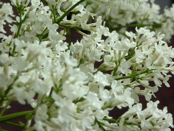 可愛小白花