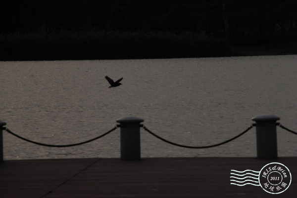 2011.10.05金雞湖0020.JPG