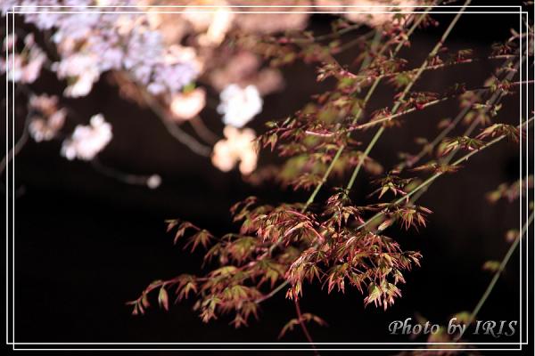 清水寺和服變裝2010_0406_183119.jpg