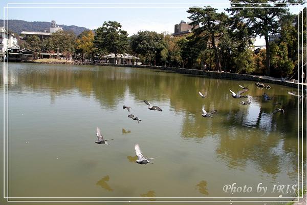 奈良古寺與梅花鹿2010_0408_112829.jpg