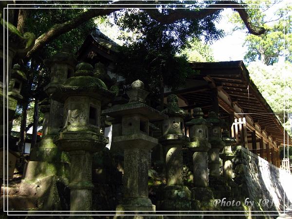 奈良古寺與梅花鹿2010_0408_130206.jpg