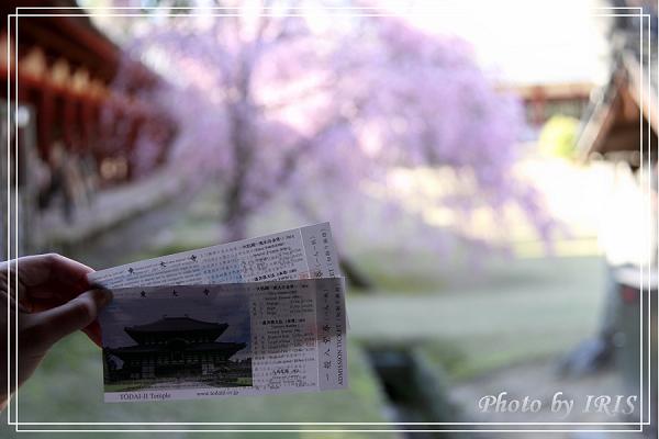 奈良古寺與梅花鹿2010_0408_145827.jpg