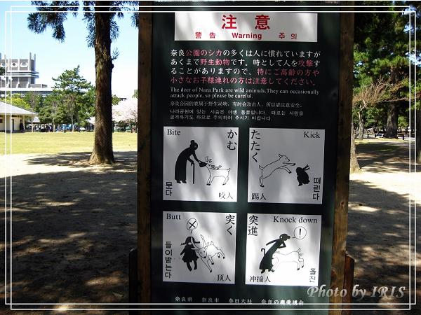 奈良古寺與梅花鹿2010_0408_115331.jpg