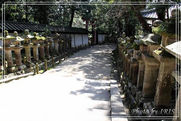 奈良古寺與梅花鹿2010_0408_135142.jpg