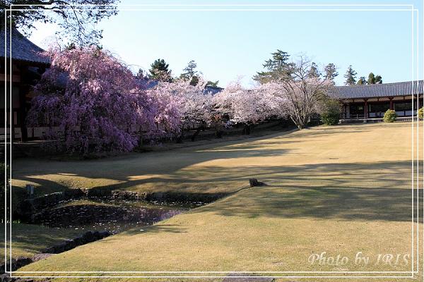 奈良古寺與梅花鹿2010_0408_150146.jpg